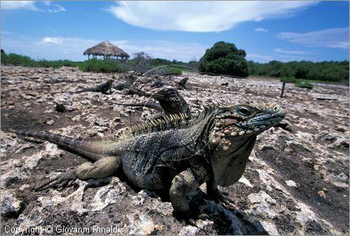 Cayo Piedra, Si primera vez, fotos desde tierra. Cuba_canarreos0089